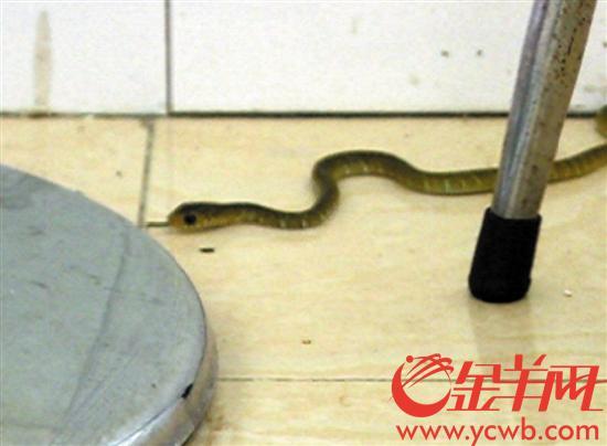 广州一居民小区惊现数十条小蛇 原是街坊存放的蛇蛋悄悄孵化
