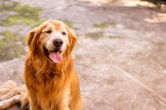 科学家近亲交配狗狗治疗人类铜中毒,这是啥操作?