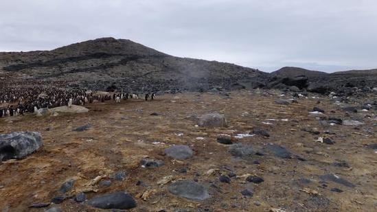 南極出現數萬具企鵝干尸,極端氣候是罪魁禍首!