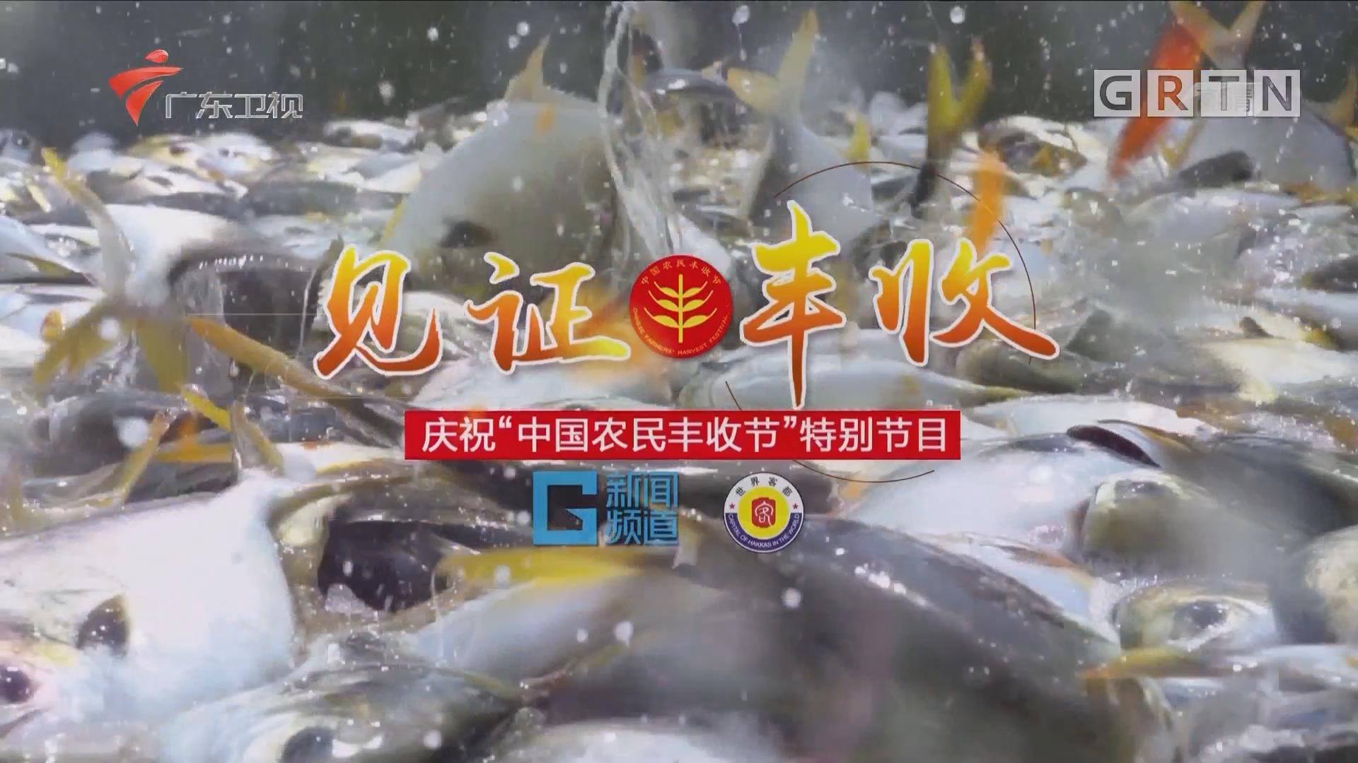 """慶祝""""中國農民豐收節""""特別節目:""""見證""""豐收"""