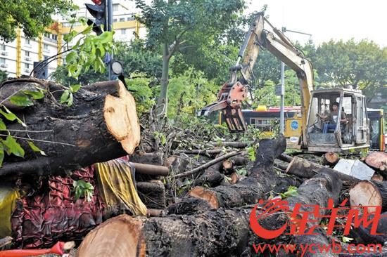 """台风山竹走了倒树隐患还在 """"低头族""""要小心防范"""