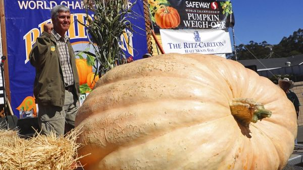 900公斤超大南瓜称霸加州世界南瓜大赛 然而它仍不是最大