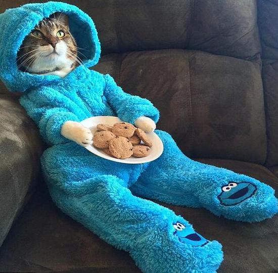 美大使馆群发乌龙电邮 邀众人参加猫咪睡衣派对