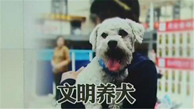 最严养犬令!遛狗不牵绳或者无证养狗将被严罚