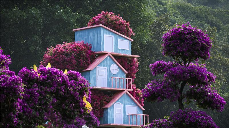 要看最美簕杜鹃花,快来雕塑公园打卡!