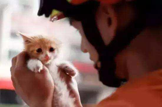 越秀一女子为叫消防员救爱猫 竟放火烧了自家房子