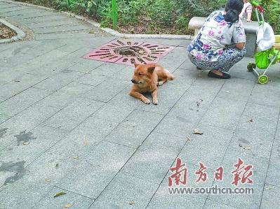 广州:遛狗不拴绳、不即时清理犬只粪便现象普遍最低罚款50元被指太少