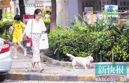 广州犬只伤人数逐年上升 去年日均289人被狗咬伤