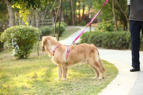 """广东""""最严养犬令""""获通过 文明犬主怎么看?"""