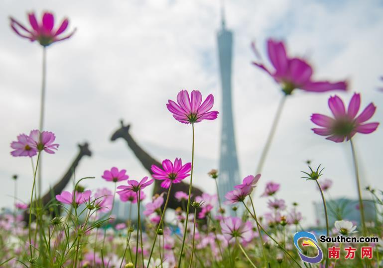 中国森林旅游节在广州开幕 新授牌24个国家森林公园