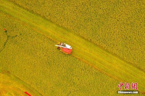 今年中国粮食总量减产74亿斤 仍属丰收年景