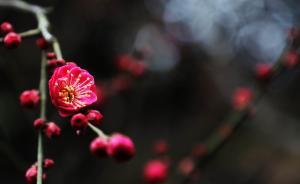 品读习近平春节团拜会重要讲话:弘扬家国情怀,开创远大前程