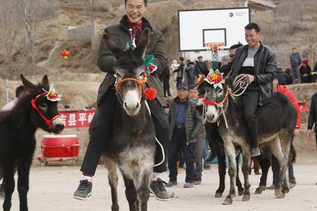 【新春走基层】骑驴、丢窝、打毛牛,宁夏西吉村民闹春忙