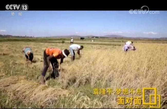 """谈梦想谈担忧谈身体!央视专访袁隆平,信息量有如""""超级稻"""""""