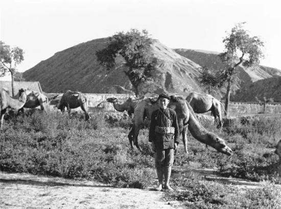 红军与红军的运输工具之一骆驼(资料照片)。新华社发(埃德加·斯诺摄)