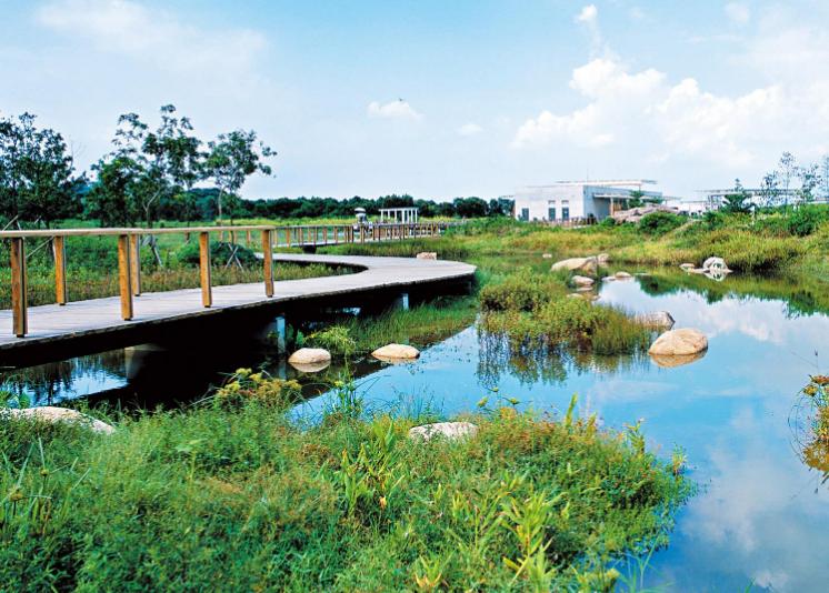 珠海斗門:濕地公園有鱷魚出沒 嚇壞街坊