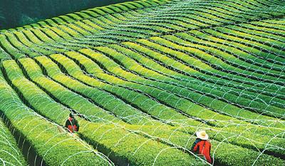 """""""三农""""领域加力补短板(2020年中国经济怎么干⑥)"""