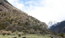 弘扬民族精神、奋斗精神  西藏玉麦姐妹——牢记嘱托 像格桑花一样扎根边陲