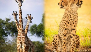 摄影师抓拍动物错位图惊呆网友
