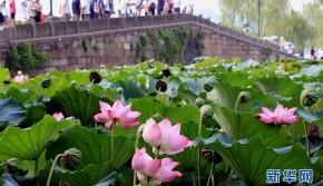 G20杭州峰会召开在即 镜头记录别样西湖