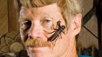 十大咬人最痛的昆虫,狭路相逢敬而远之